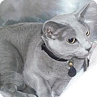 Adopt A Pet :: Isis - El Cajon, CA