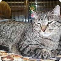 Adopt A Pet :: Nathan - Colmar, PA