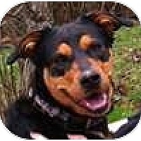 Adopt A Pet :: Nala - Hamilton, ON