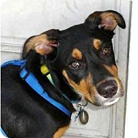 Adopt A Pet :: Chesley - Orlando, FL