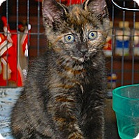 Adopt A Pet :: Tallulah - Sunderland, ON