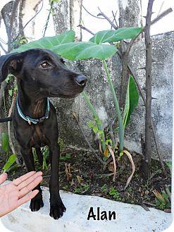Small Dog Animal Rescue Alberta