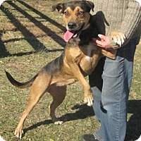 Adopt A Pet :: Serena - Thomaston, GA