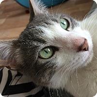 Adopt A Pet :: Clover - St. Louis, MO