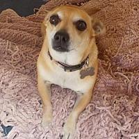 Adopt A Pet :: BooBoo - Encino, CA