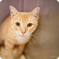 Adopt A Pet :: Apricot - Valley Falls, KS