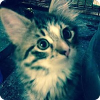 Adopt A Pet :: Zoey - Delmont, PA