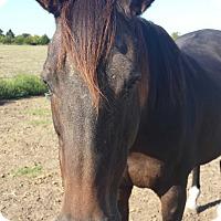 Adopt A Pet :: Ebby - Farmersville, TX