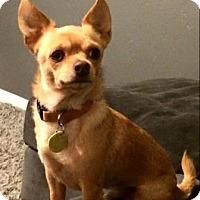 Adopt A Pet :: PeeDee - Scottsdale, AZ