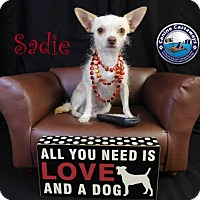 Adopt A Pet :: Sadie - Arcadia, FL