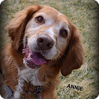 Adopt A Pet :: Annie - Independence, MO