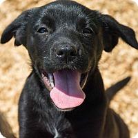 Adopt A Pet :: Pearl - $250 - Seneca, SC