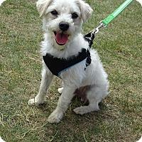 Adopt A Pet :: Wesley - Alden, NY