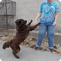 Adopt A Pet :: Conan - Lewisburg, TN