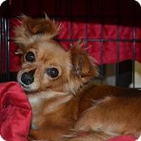 Adopt A Pet :: Pumpkin - Deerfield Beach, FL