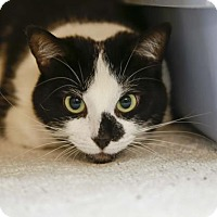 Adopt A Pet :: Beauty - Kettering, OH