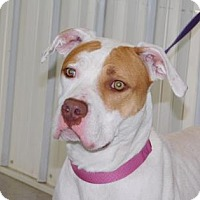 Adopt A Pet :: Holly - Freeport, IL