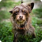 Adopt A Pet :: Lexi
