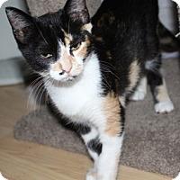 Adopt A Pet :: KiraE - North Highlands, CA