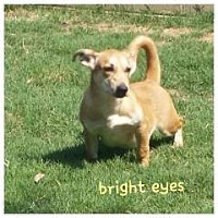 Adopt A Pet :: bright eyes - Gadsden, AL