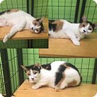 Adopt A Pet :: aurora - Bryan, OH