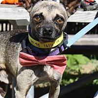 Adopt A Pet :: Peter - Poughkeepsie, NY