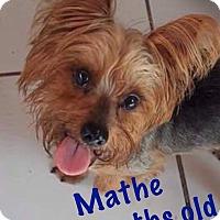 Adopt A Pet :: Mathe - LAKEWOOD, CA