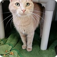 Adopt A Pet :: Maddie - Chippewa Falls, WI