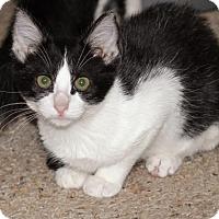 Adopt A Pet :: Mel - Arlington, TX