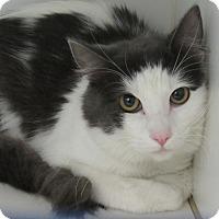 Adopt A Pet :: Bean - Long Beach, CA