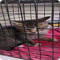 Adopt A Pet :: BYRON - Jacksonville, FL