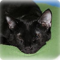 Adopt A Pet :: Kylo - Springfield, PA