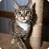 Adopt A Pet :: Moe $35 adoption specail - Monterey, VA