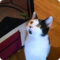 Adopt A Pet :: Logan - Concord, NC