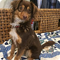 Adopt A Pet :: Nora - Santa Ana, CA