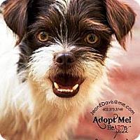 Adopt A Pet :: Yoda - Gilbert, AZ