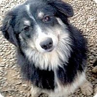 Adopt A Pet :: Mikey fluff, big boy - Sacramento, CA