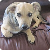 Adopt A Pet :: Logan Adoption Pending - N. Fort Myers, FL