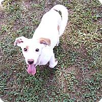 Adopt A Pet :: Frost - Hollis, ME