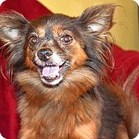 Adopt A Pet :: Harriette - Knoxville, TN