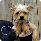 Adopt A Pet :: Meg T~B
