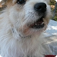Adopt A Pet :: OTTO BOBO - ROCKMART, GA