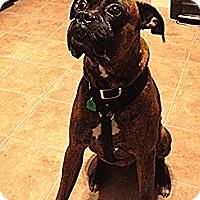 Adopt A Pet :: Morris - Woodbine, MD