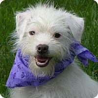 Adopt A Pet :: Harold - Mocksville, NC