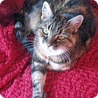 Adopt A Pet :: Triscilla - Mississauga, Ontario, ON