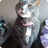 Adopt A Pet :: Olive - Lakewood, CO