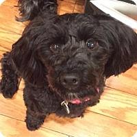 Adopt A Pet :: Sophie4 - Scottsdale, AZ