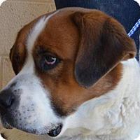 Adopt A Pet :: Nala ID: KC16-1 is in danger in Ridgecrest,CA - Beverly Hills, CA