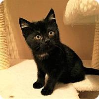 Adopt A Pet :: Bear~ADOPTED! - Davenport, IA