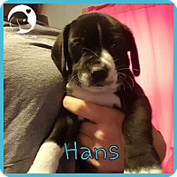 Adopt A Pet :: Hans - Pittsburgh, PA
